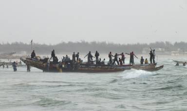 NON à l'octroi de plus de 50 licences de pêche de chalutier au Sénégal - Protégeons nos ressources-1