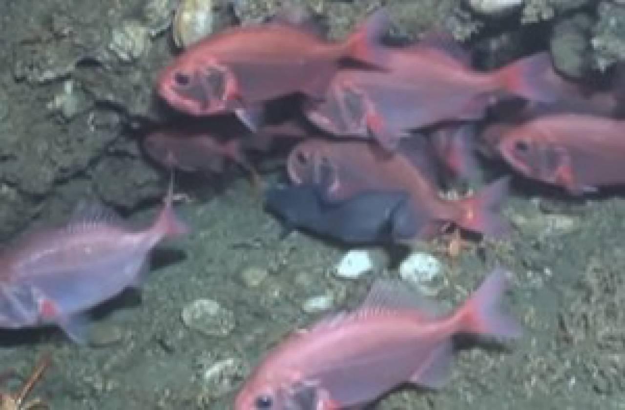 Immersion en terre inconnue : la mer profonde en Mauritanie