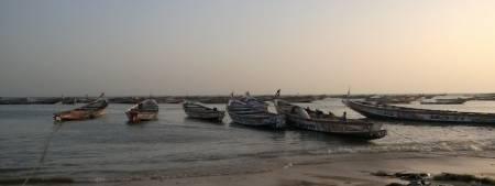 Repos biologique du 15-10-14 au 15-11-14 pour les navires de pêche industrielle démersale, et sur le poulpe pour la pêche artisanale