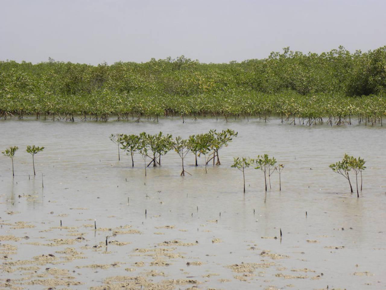 Face au changement climatique, l'ONU veut inciter à la création d'aires marines protégées
