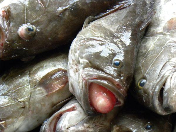 Le secteur des Pêches Maritimes du Sénégal